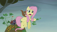 Fluttershy addresses the Hooffields and McColts S5E23