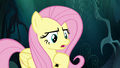 "Fluttershy ""you can come back with me"" S6E11.png"