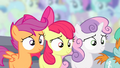 Cutie Mark Crusaders awaiting announcement S4E05.png