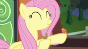 Fluttershy and a bird on the train S4E22