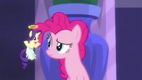 Angel Rarity shrugging to Pinkie Pie S6E9