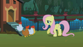 Fluttershy and the chickens S01E17.png