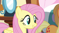 "Fluttershy ""what kind of a rock are they?"" S4E18.png"