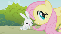 "Fluttershy and Angel ""you need some water?"" S1E07"
