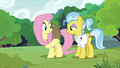 Fluttershy lifts Lola the sloth onto her back S7E5.png