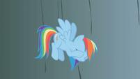 Rainbow Dash exasperated when Fluttershy falls S1E07