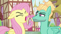 Fluttershy yelling at Zephyr Breeze S6E11.png