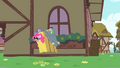 Pinkie Pie hops after Rainbow Dash S1E25.png
