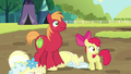 Apple Bloom and Big Mac hear registration pony S5E17.png