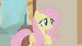 Fluttershy is confused S1E10.png