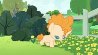 Young Pear Butter walks through buttercups S7E13