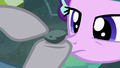 Maud Pie pointing to age lines on Boulder S7E4.png