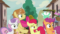 CMCs and Feather Bangs look at Big Mac and Sugar Belle S7E8
