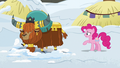 Pinkie Pie asks what Rutherford is doing S7E11.png
