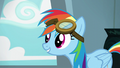 """Rainbow Dash """"I'd stand out more if I didn't"""" S6E7.png"""