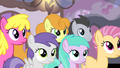 Ponies looking at Fluttershy S4E14.png