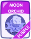 Moon purple
