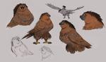 Maui-as-a-bird-ca