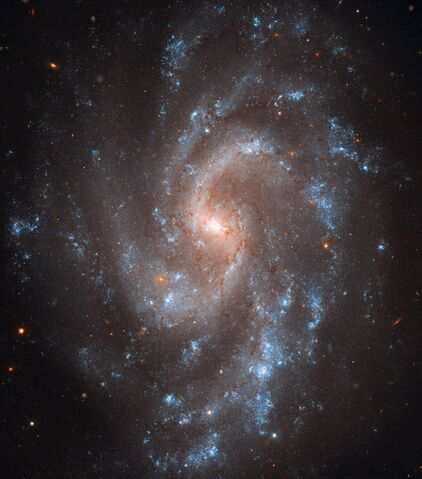File:NGC5585large.jpg