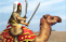 File:Img camel warrior elite tap.png