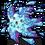 323 Water Starfish BMK