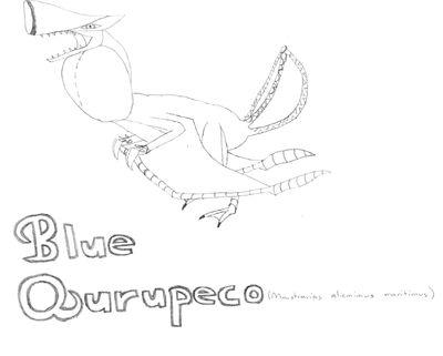 Blue Qurupeco