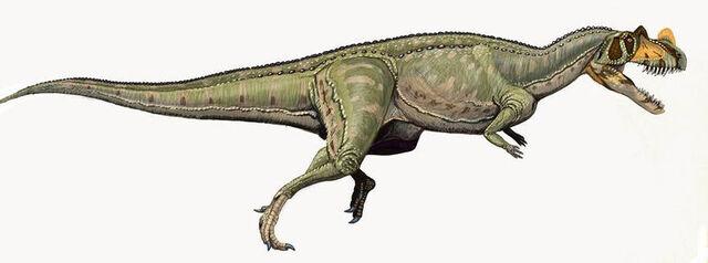 File:Ceratosaurus nasicornis DB.jpg
