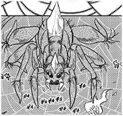 Araignée Démoniaque thumb