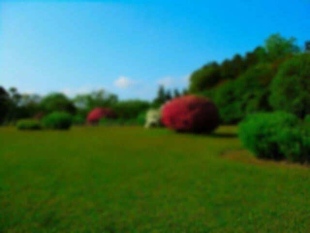 File:深の家の庭 hiru.jpg