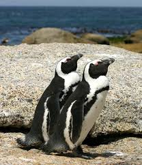 File:2 penguins.png