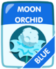 Blue Moon Orchid