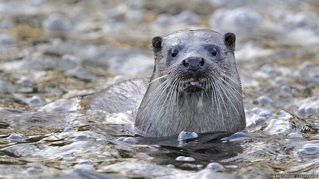 File:Otter4.jpg