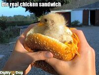 http://www.digmydog.org/the-real-chicke-food-bird-dogs-3047