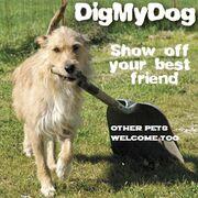 Logo - Dig My Dog