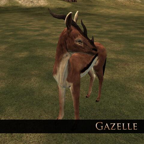 File:Gazelle 1.jpg