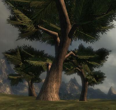 Brownwood Tree