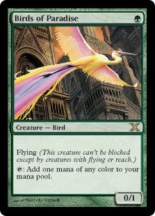 Birds of Paradise 10E