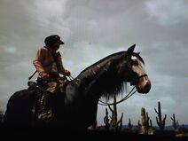 Jack on dead horse
