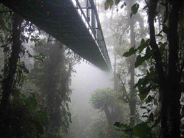 Jungle Planet Bridge