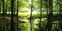 Spectacular Swamp