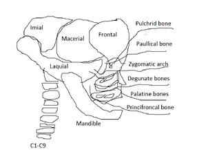 Vorian skull