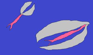 Crustoccupa