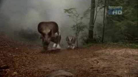 Dinoterra hunt