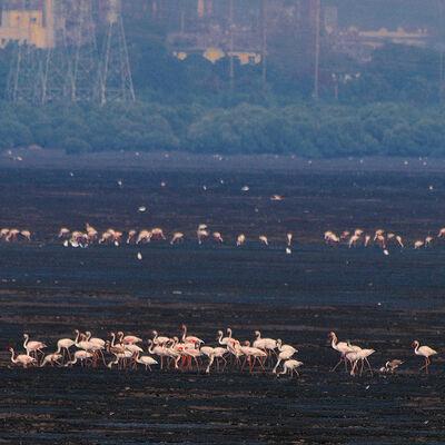 Flamingo Overload
