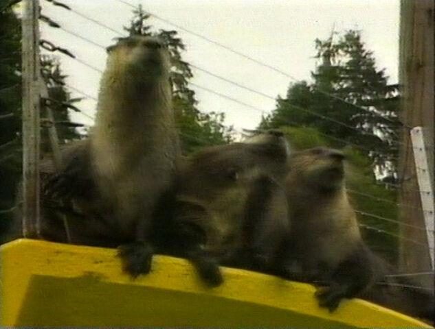 File:Rua episode 16 otter.jpg