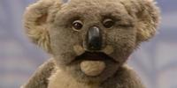 Flora the Koala