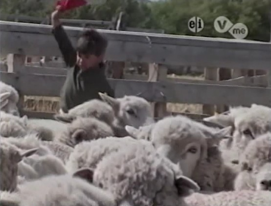 File:SheepHerding.jpg