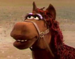 Fred the Wonder Horse headshot