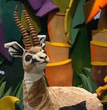 Episode 101: Cheetah & Gazelle