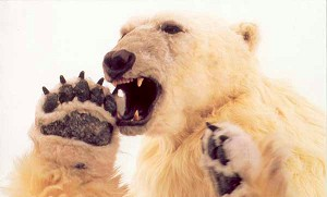 File:Polarbearking.jpg